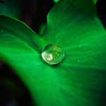 nature-plant-leaf-drop-of-water