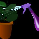 houseplant-155455_1280