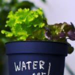 Blumentopf, Kunststoff, Balkon bepflanzen,