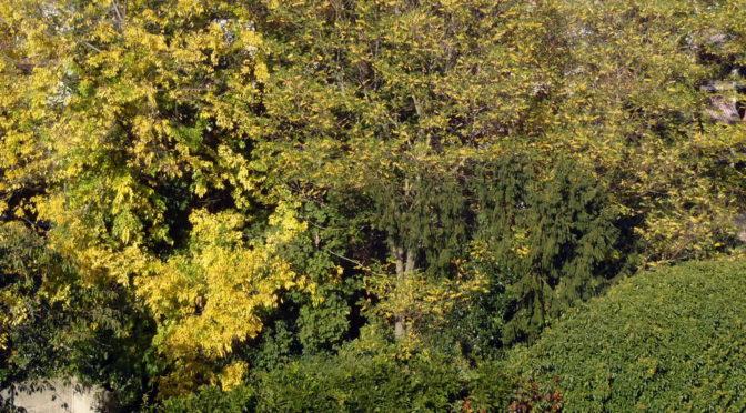Glodener Herbst