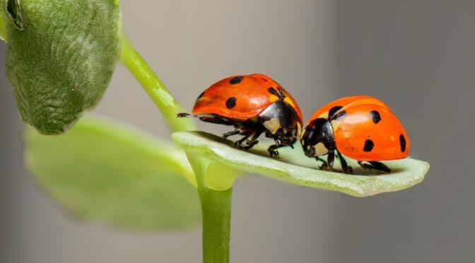 Blattläuse und Käferchen