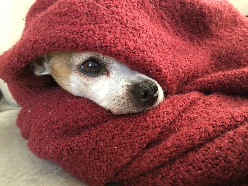 Hund mit Kälteschutz