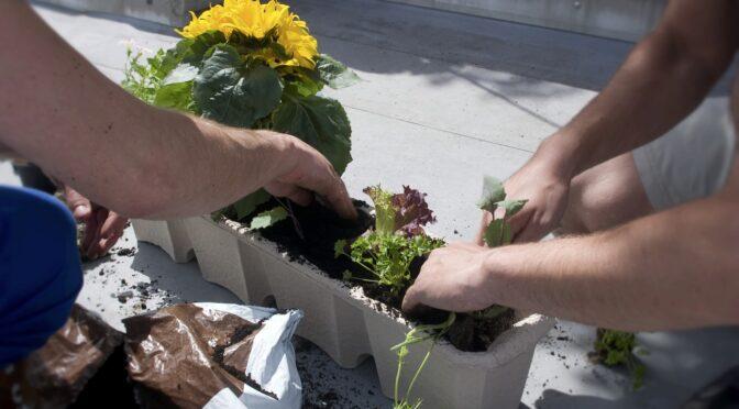 Speed Gardening